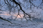 Branches in a snowy